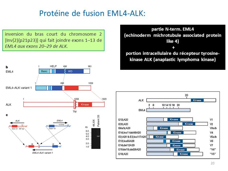 (echinoderm michrotubule associated protein like 4)