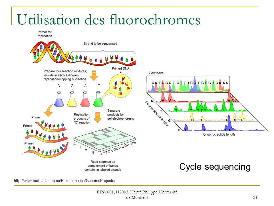Utilisation des fluorochromes