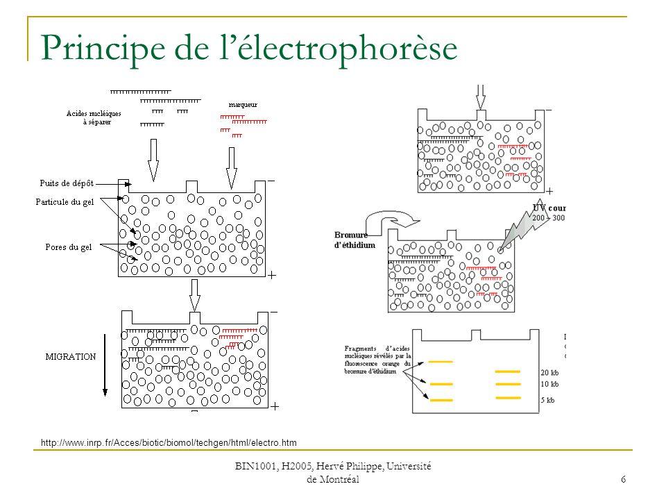 Principe de l'électrophorèse