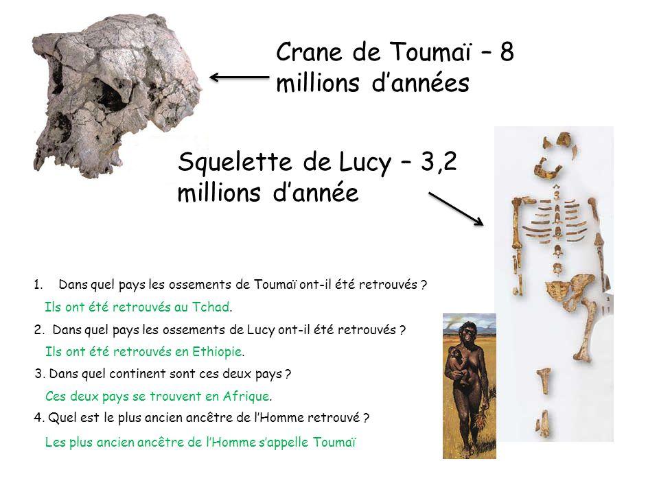 Crane de Toumaï – 8 millions d'années