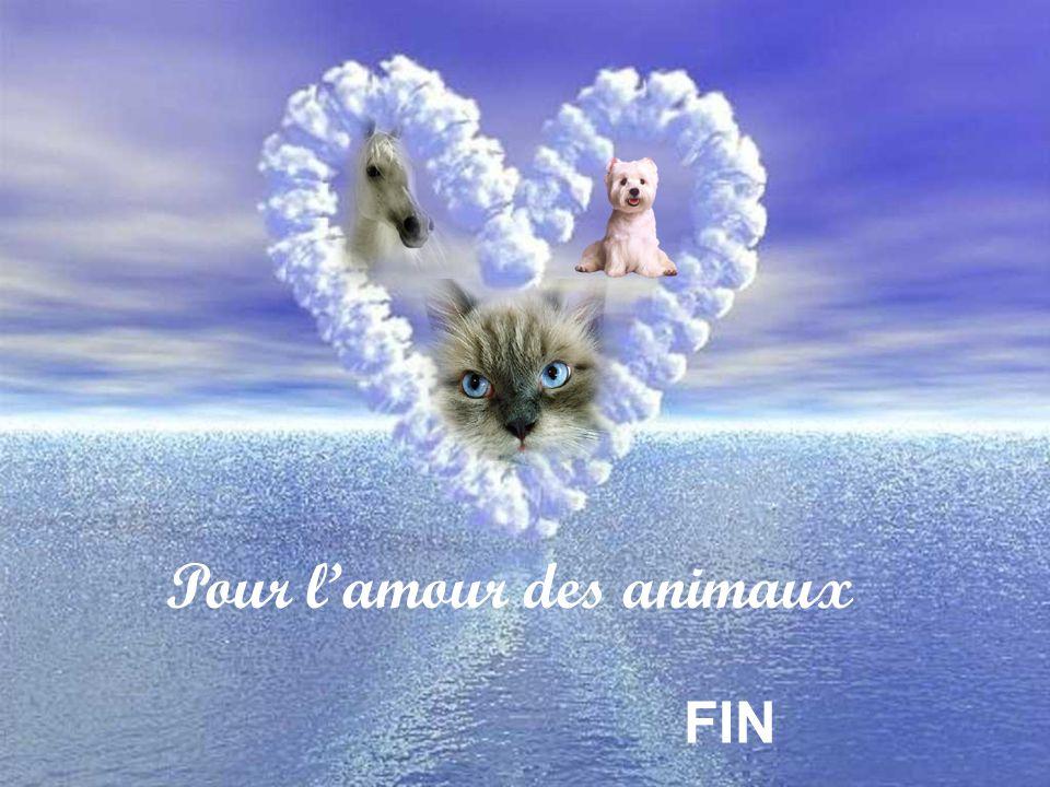 Pour l'amour des animaux