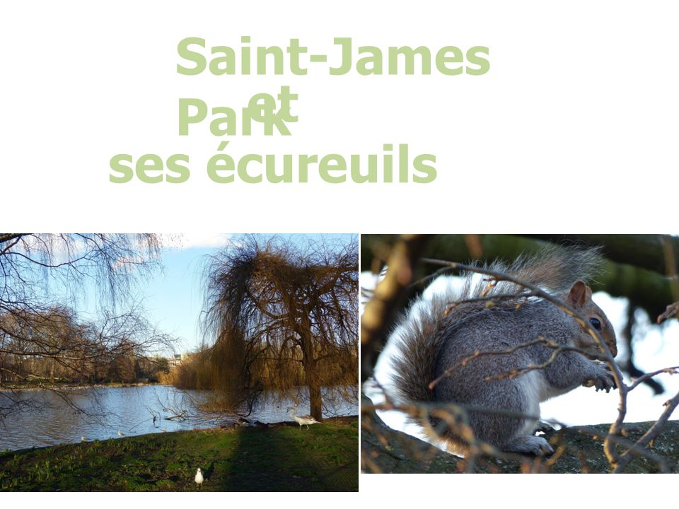Saint-James Park et ses écureuils