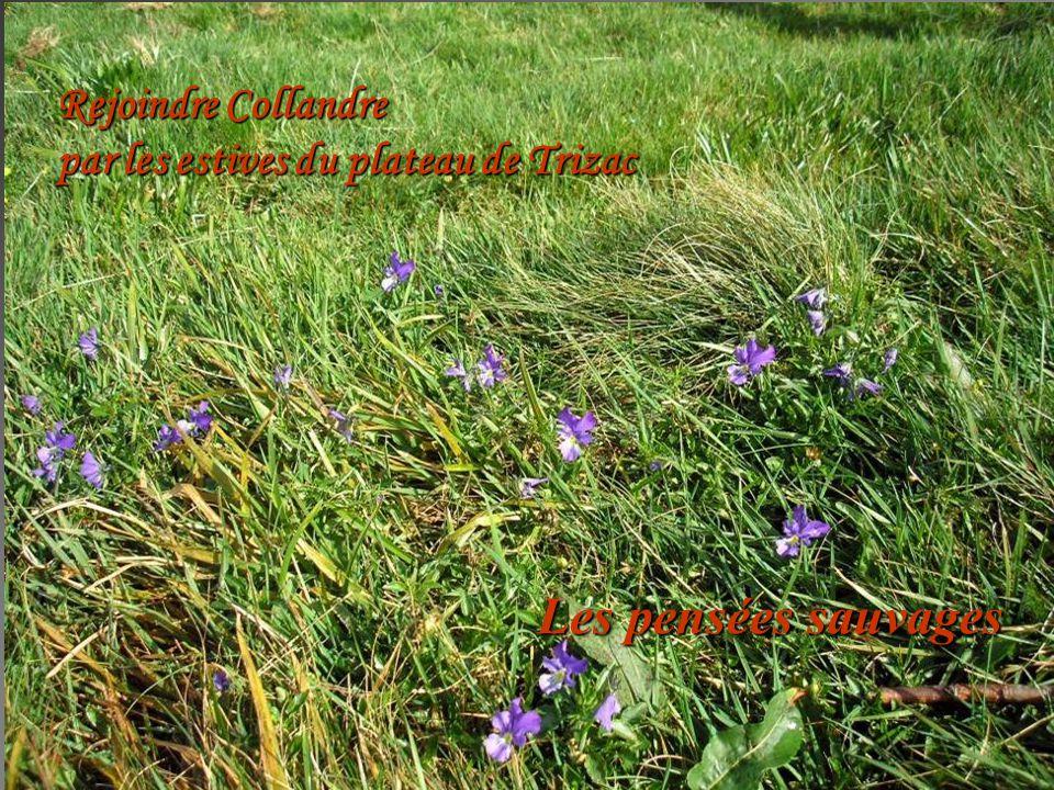 Rejoindre Collandre par les estives du plateau de Trizac