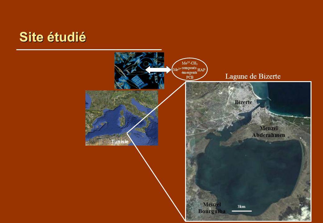 Site étudié Lagune de Bizerte Bizerte Menzel Abderahmen