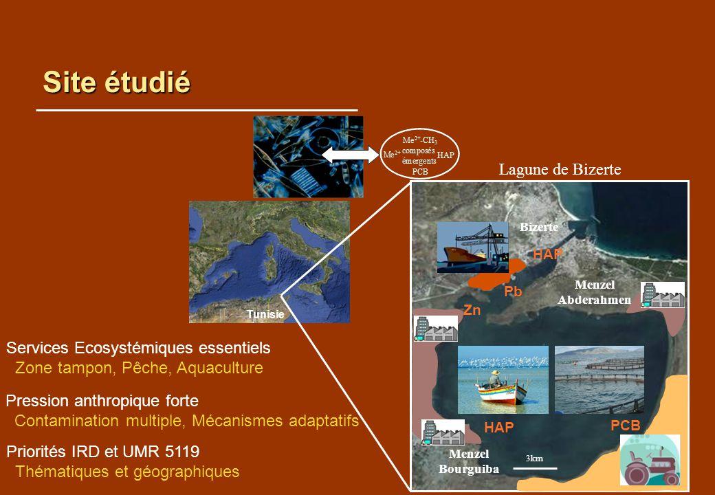 Site étudié Lagune de Bizerte Services Ecosystémiques essentiels