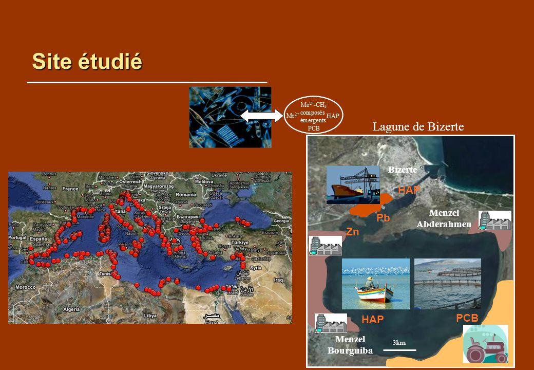 Site étudié Lagune de Bizerte Pb Zn PCB HAP Bizerte Menzel Abderahmen