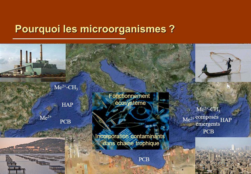 Pourquoi les microorganismes