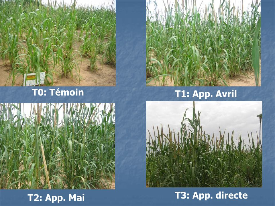T0: Témoin T1: App. Avril T3: App. directe T2: App. Mai