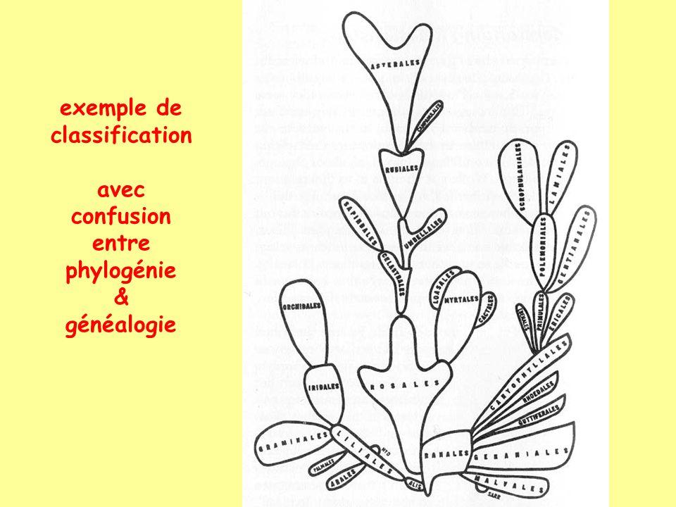 exemple de classification avec confusion entre phylogénie & généalogie