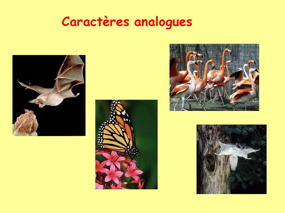Caractères analogues