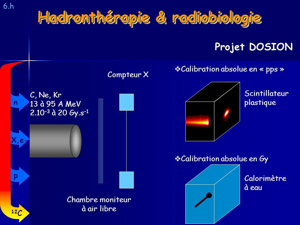 Hadronthérapie & radiobiologie
