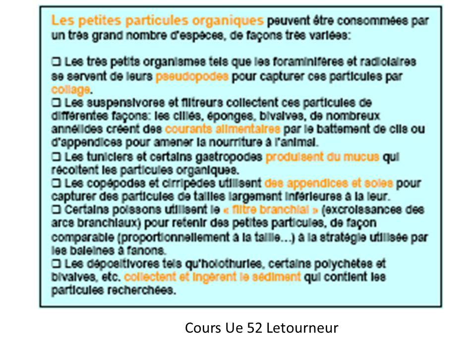 Cours Ue 52 Letourneur