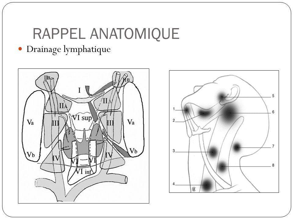 RAPPEL ANATOMIQUE Drainage lymphatique