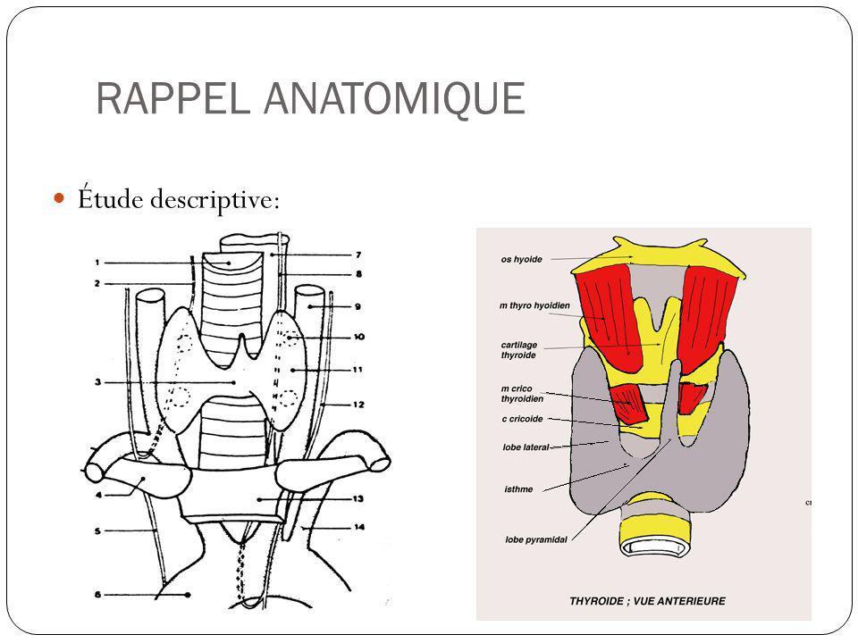 RAPPEL ANATOMIQUE Étude descriptive: