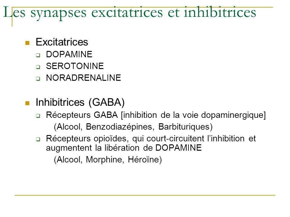 Les synapses excitatrices et inhibitrices