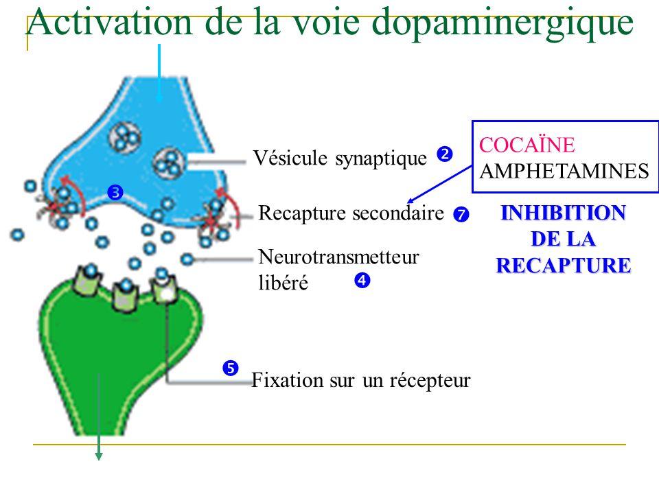 Activation de la voie dopaminergique