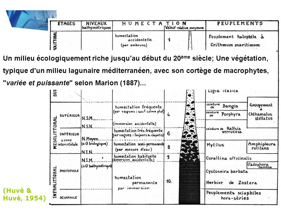 Un milieu écologiquement riche jusqu au début du 20ème siècle; Une végétation, typique d un milieu lagunaire méditerranéen, avec son cortège de macrophytes, variée et puissante selon Marion (1887)...