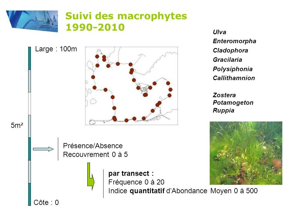Suivi des macrophytes 1990-2010 Large : 100m 5m² Présence/Absence