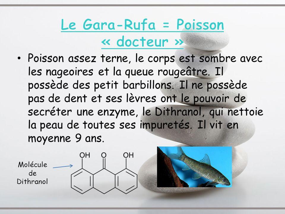 Le Gara-Rufa = Poisson « docteur »