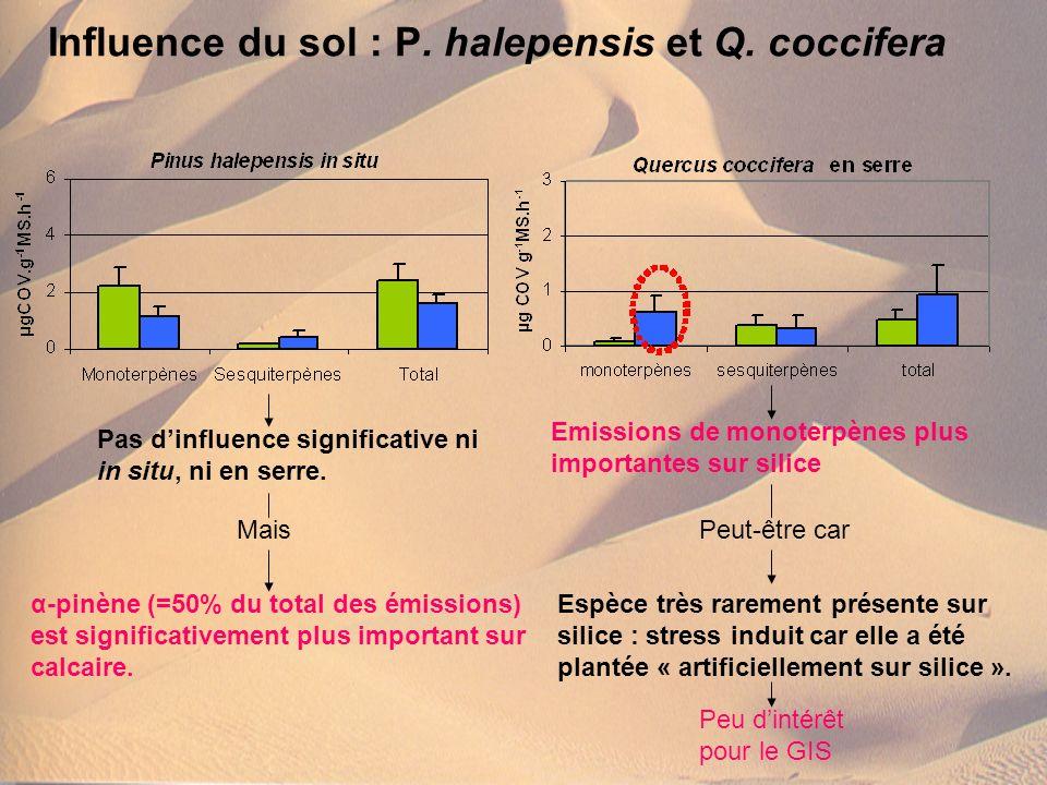 Influence du sol : P. halepensis et Q. coccifera