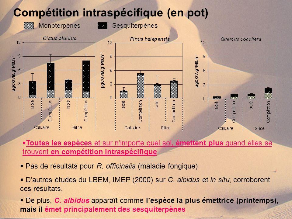 Compétition intraspécifique (en pot)