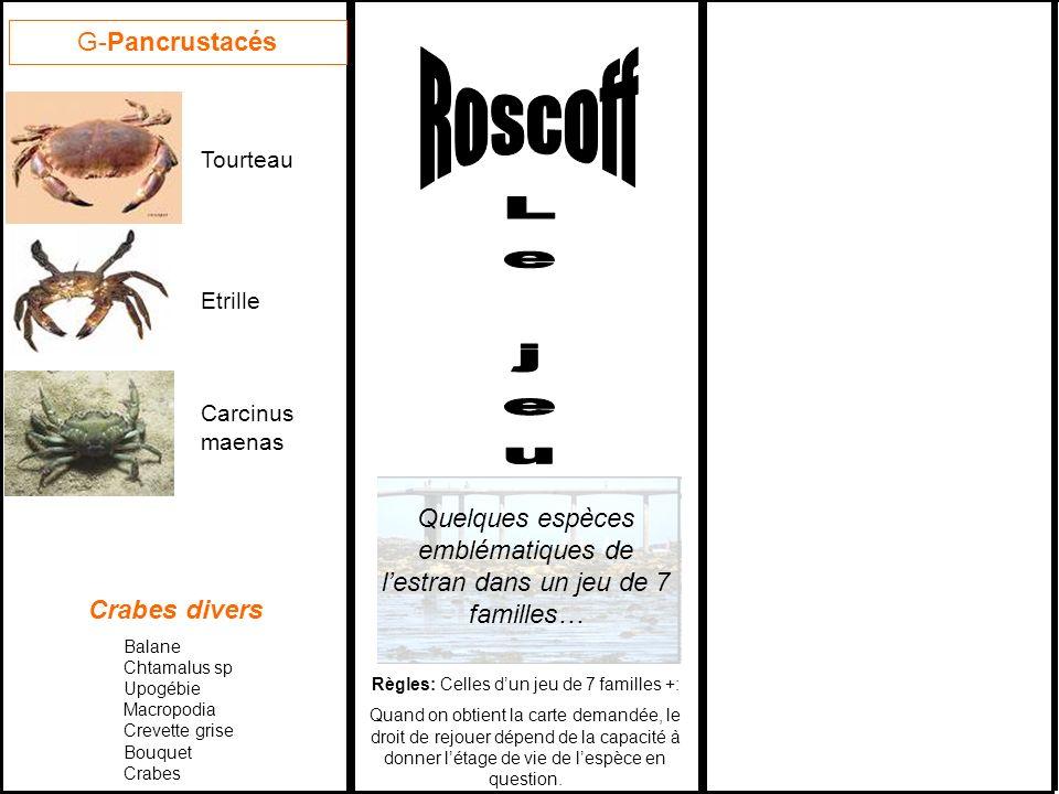 Roscoff Le jeu G-Pancrustacés