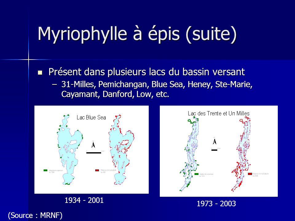 Myriophylle à épis (suite)