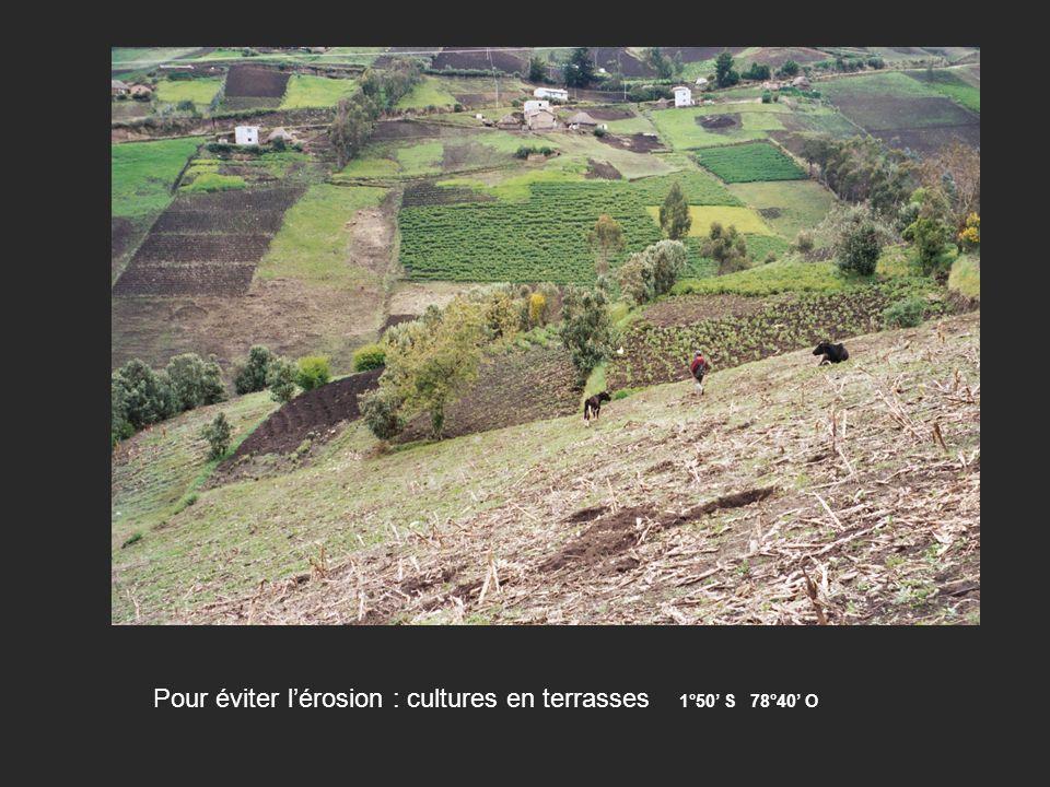 Pour éviter l'érosion : cultures en terrasses 1°50' S 78°40' O
