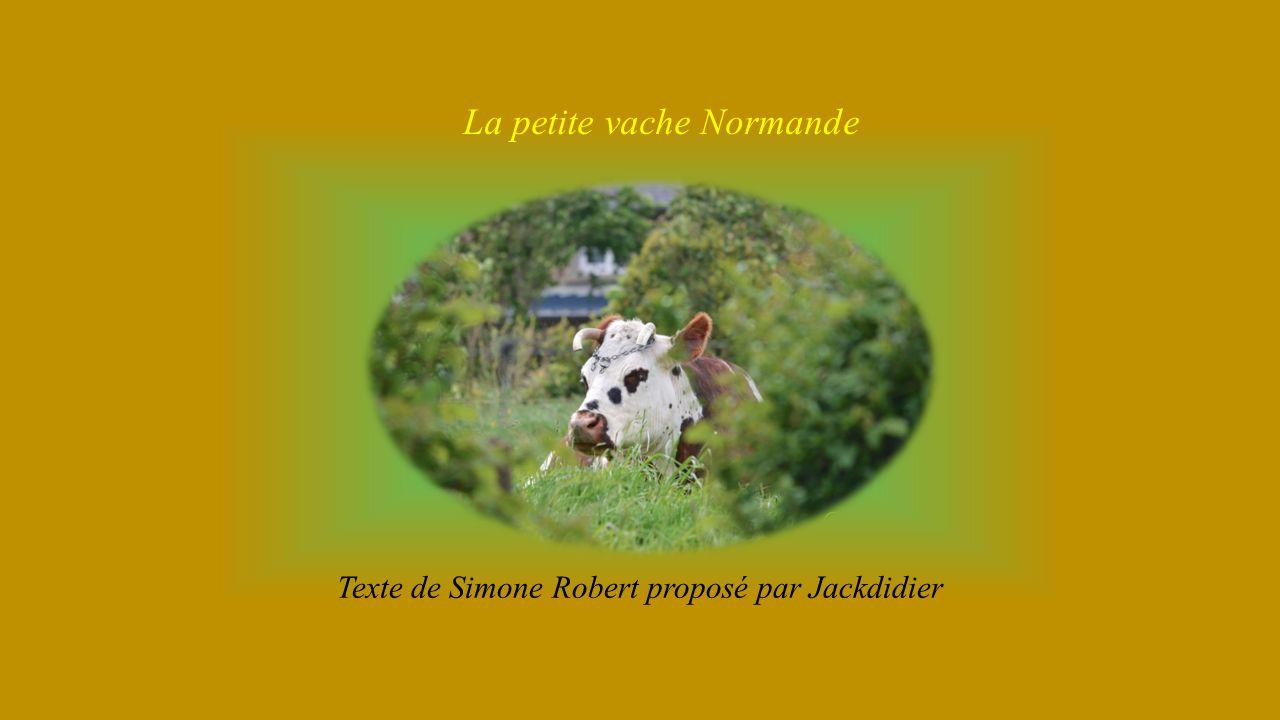 La petite vache Normande