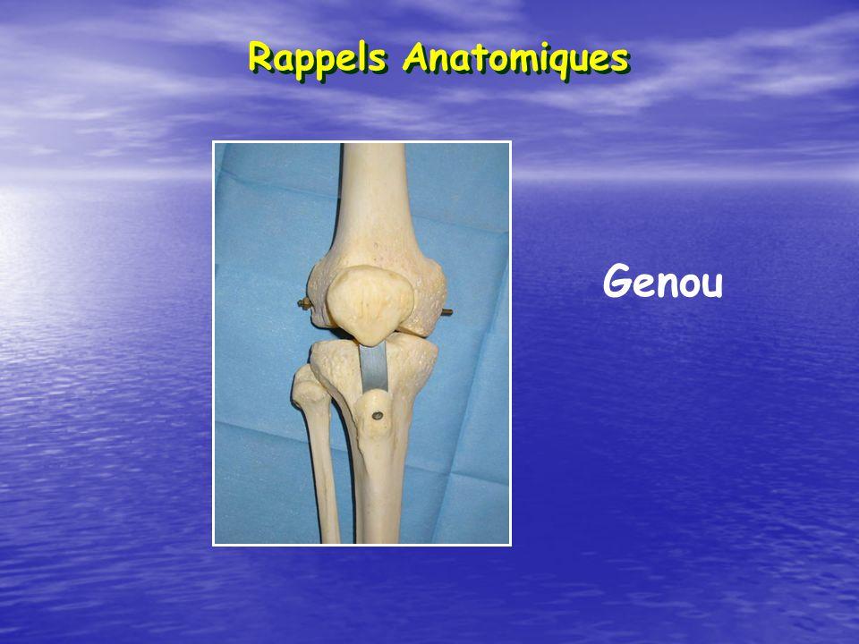 Rappels Anatomiques Genou
