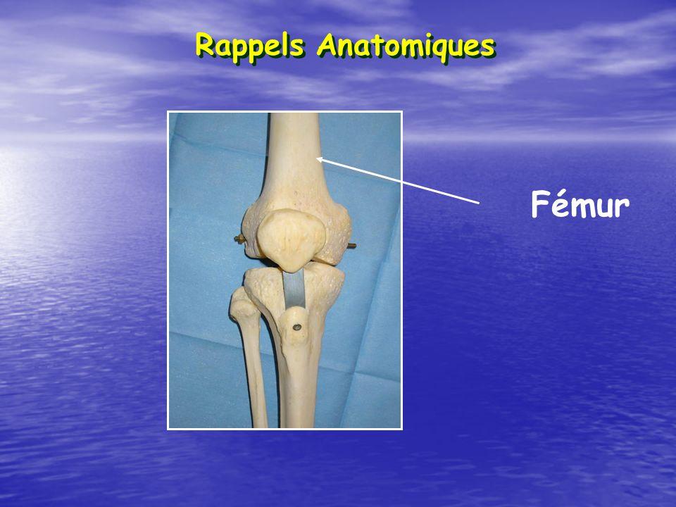Rappels Anatomiques Fémur