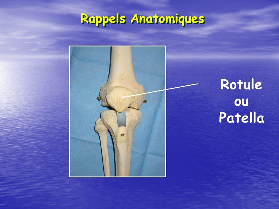 Rappels Anatomiques Rotule ou Patella