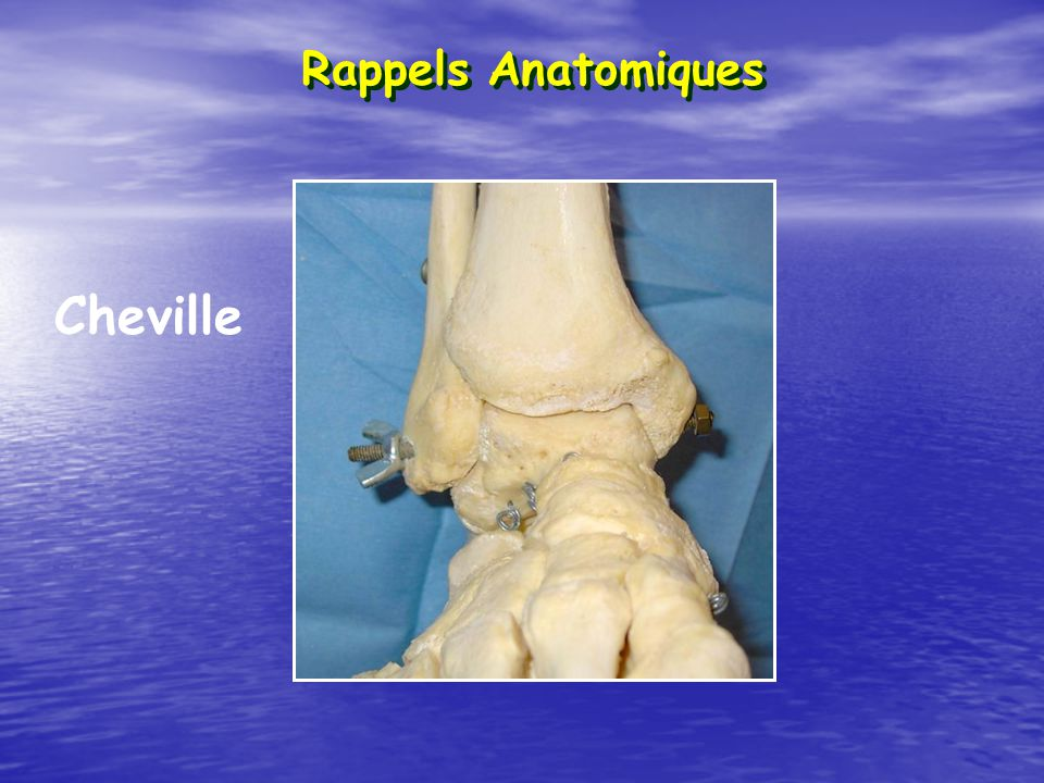 Rappels Anatomiques Cheville