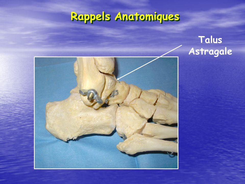 Rappels Anatomiques Talus Astragale