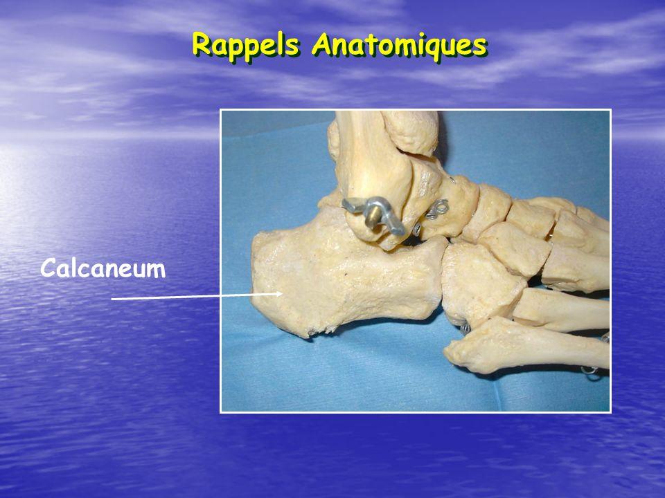 Rappels Anatomiques Calcaneum