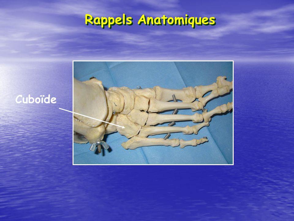 Rappels Anatomiques Cuboïde