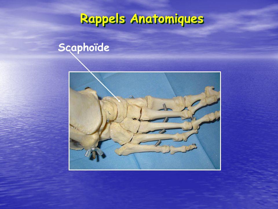 Rappels Anatomiques Scaphoïde