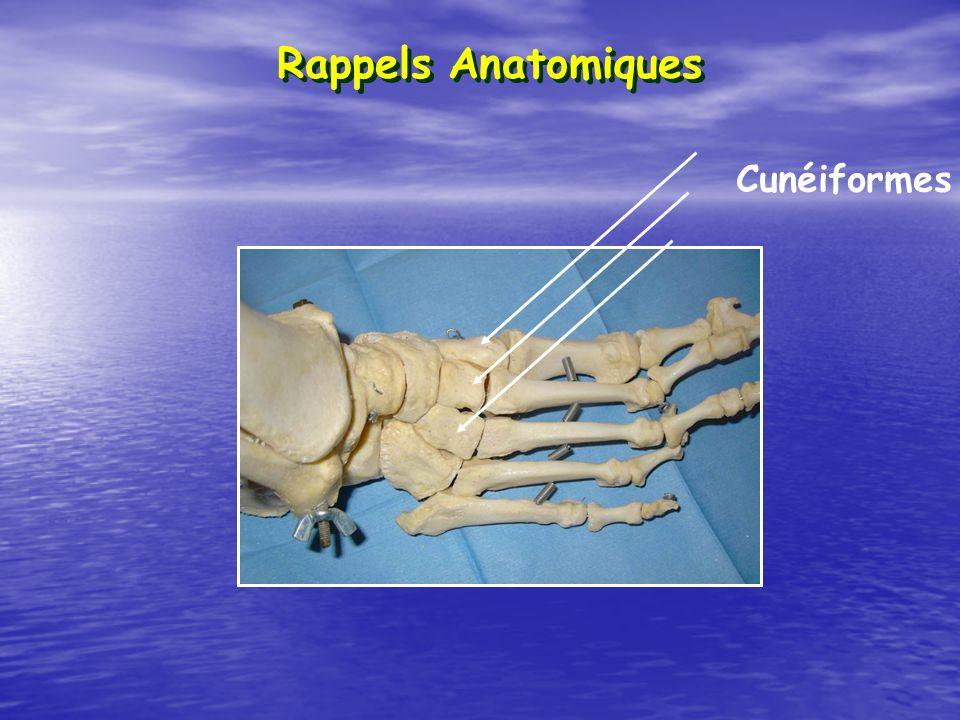 Rappels Anatomiques Cunéiformes