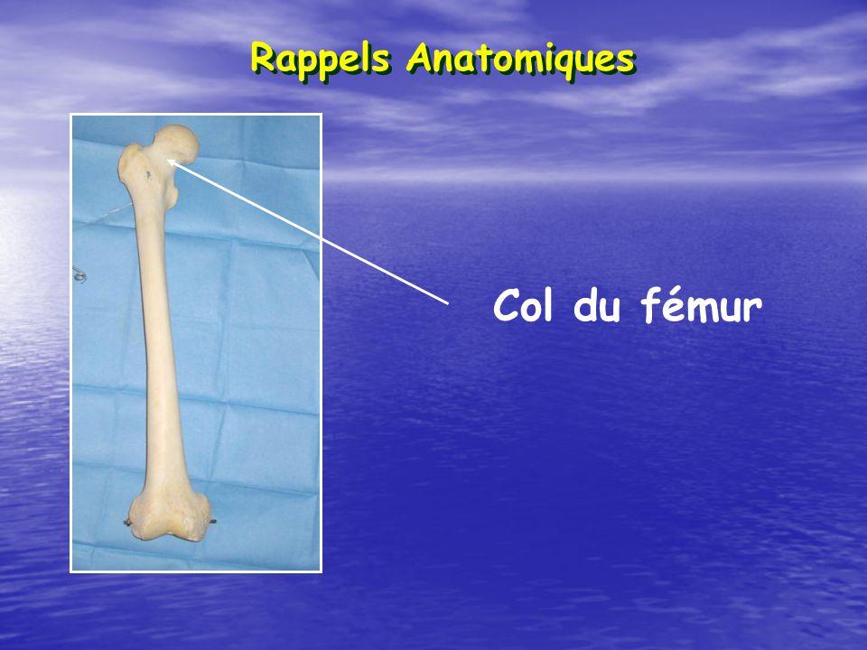 Rappels Anatomiques Col du fémur