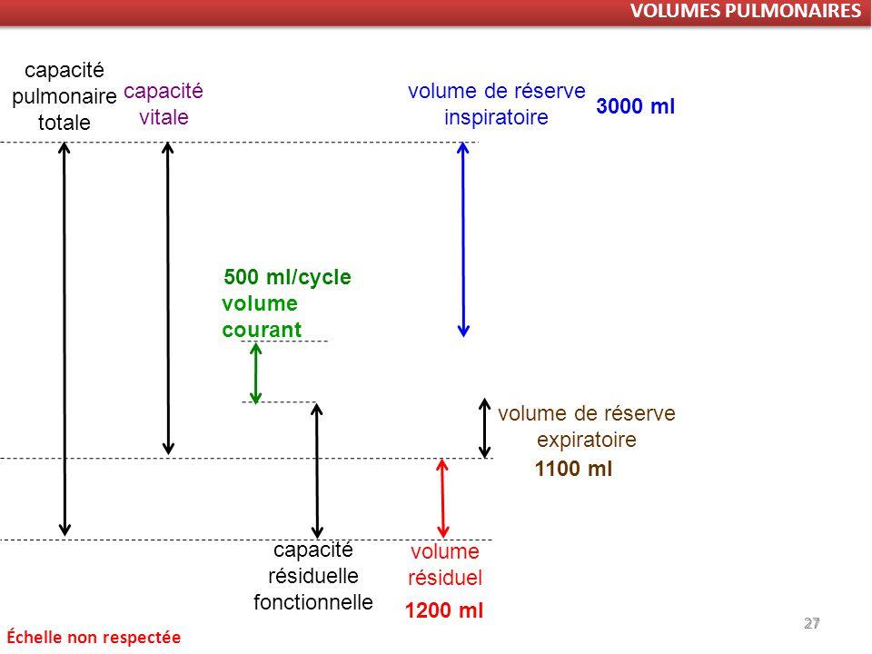capacité pulmonaire totale capacité vitale