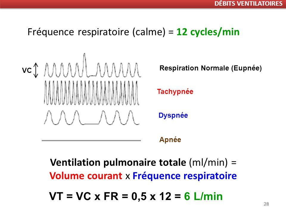 Fréquence respiratoire (calme) = 12 cycles/min