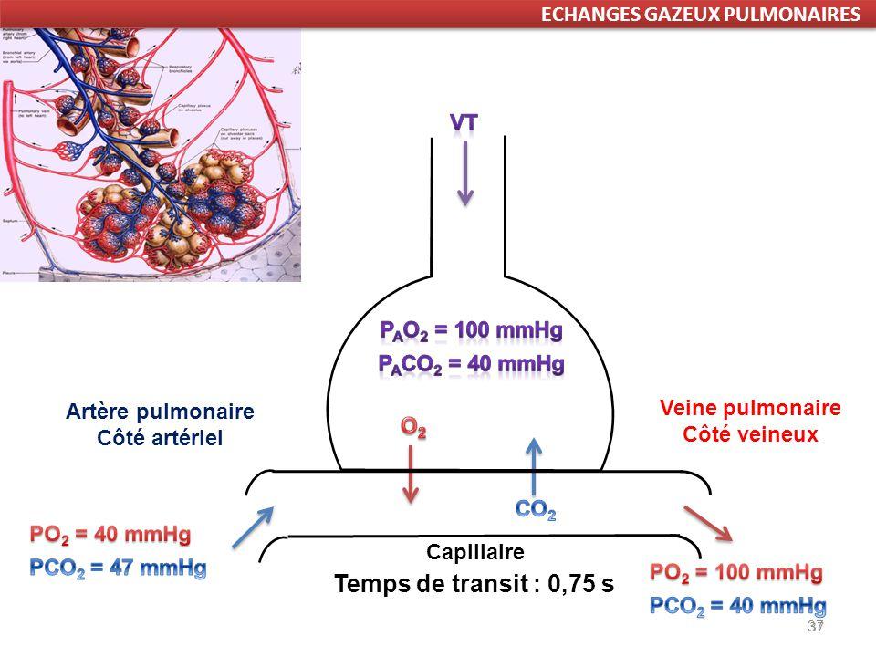 Temps de transit : 0,75 s ECHANGES GAZEUX PULMONAIRES Vt