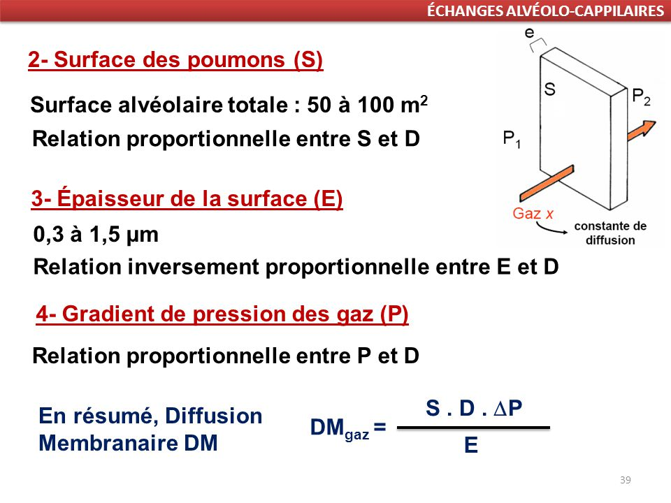2- Surface des poumons (S)