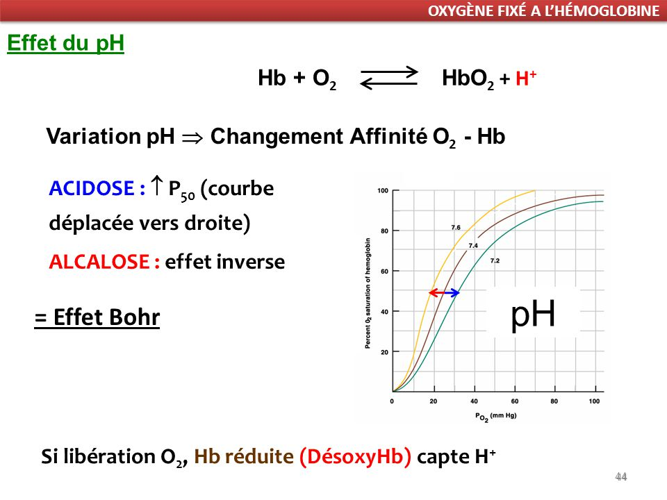 pH = Effet Bohr Effet du pH Hb + O2 HbO2 + H+