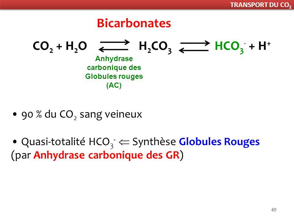 Anhydrase carbonique des Globules rouges (AC)