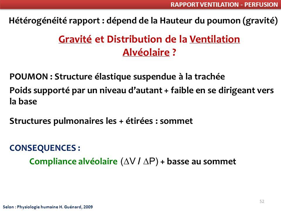 Gravité et Distribution de la Ventilation Alvéolaire