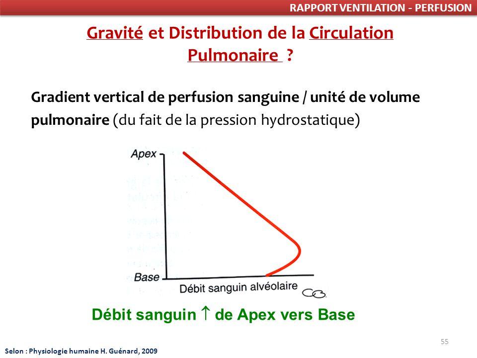 Gravité et Distribution de la Circulation Pulmonaire