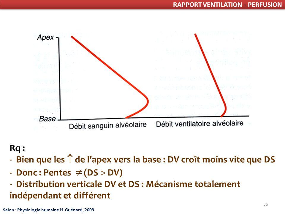 - Bien que les  de l'apex vers la base : DV croît moins vite que DS