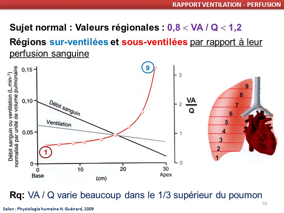 Sujet normal : Valeurs régionales : 0,8  VA / Q  1,2