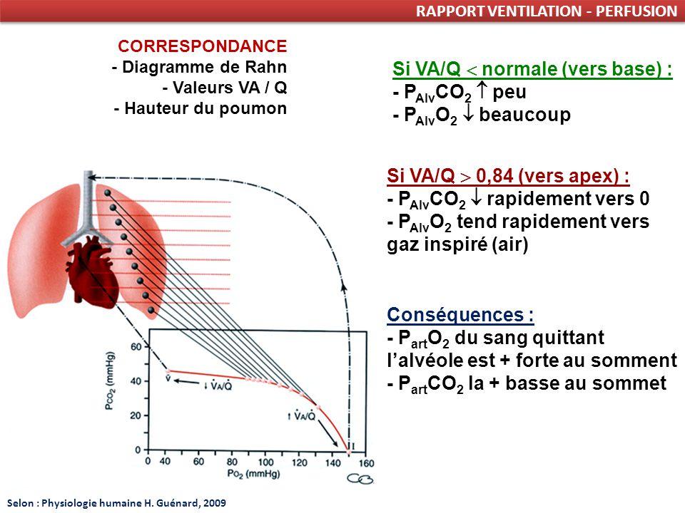 Si VA/Q  normale (vers base) : - PAlvCO2  peu - PAlvO2  beaucoup
